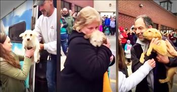 Don't Miss 57 Dogs Saved From Kill Shelters As They Meet Their Furever Families