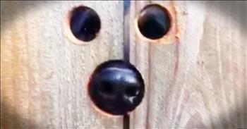 Neighbor Makes Peephole In Fence For Jumping Dog