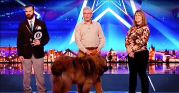 Married Couple And Dog Break World Record With Audition