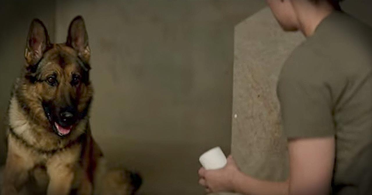 'Megan Leavey' - Movie Trailer Of Marine And Her Life-Saving Dog - Movies