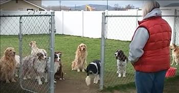 Smart Dogs Wait For Their Name To Be Called