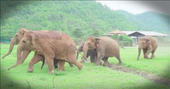 Elephants Joyfully Welcome Baby Elephant To The Family