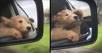 Dog Loves Sticking His Head Out Of The Window