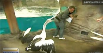 Weatherman Gets Attacked By A Pelican And Can't Stop Laughing