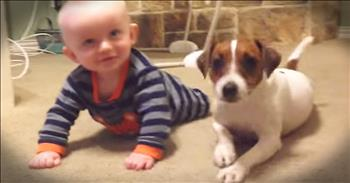 Tiny Dog Teaches Baby How To Crawl
