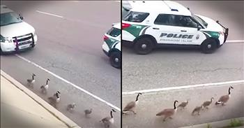Family Of Geese Get Police Escort