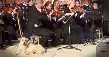 Curious Dog Walks Into Orchestra Performance