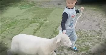 5-Year-Old Shepherd Is Adorable