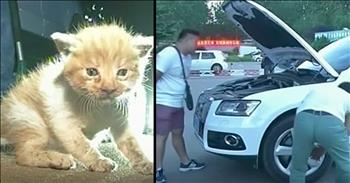 Good Samaritans Rescue Kitten In Car's Engine