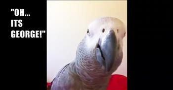Funny Parrot Takes A Selfie
