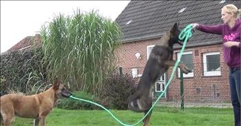 Talented Dog Helps His Friend Jump Rope