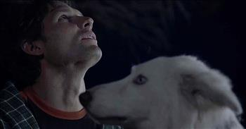 'The Stray' - Inspiring True Story Of Dog That Answered A Family's Prayers