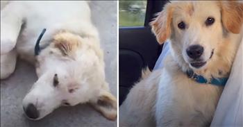 Travelers Give Stray Puppy A Forever Home