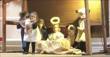 Sheep Takes Baby Jesus During Christmas Play