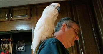 Cockatoo Serenades Owner With 'I Love You' Song