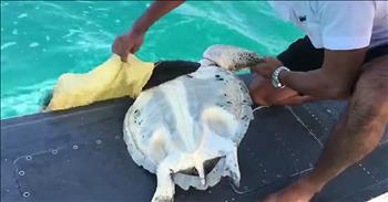 Rescuers Land Plane In Water For Helpless Sea Turtle