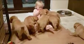 Adorable Puppy Stampede Overtakes Toddler