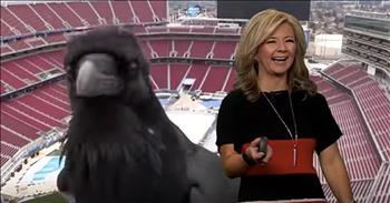 Bird Photobombs News Meteorologist