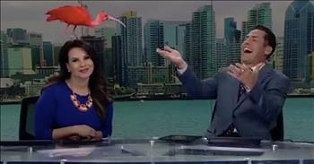 Bird Lands On News Anchor's Head