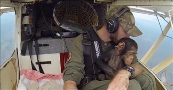 Rescue Pilot's Shares Touching Flight With Baby Chimp