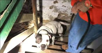 Abandoned Pitbull Left Chained In Basement