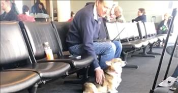 Corgi Comforts Grieving Passenger At Airport