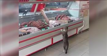 Cat Walks Into A Grocery Store And Picks Food