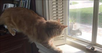 Cat Tries To Sneak Up On Squirrel