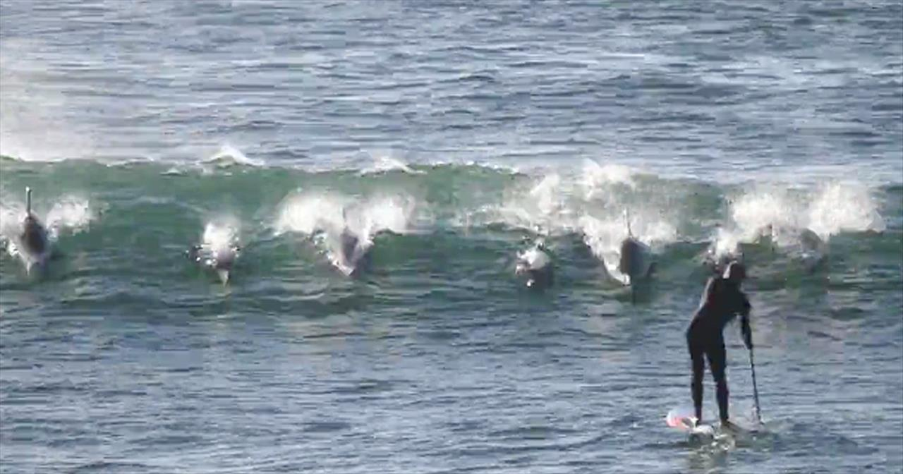 dolphin knocks surfer off board