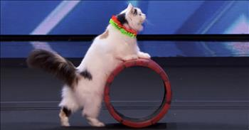 Trained Cat Troupe Dazzles During Audition