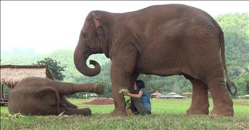 Momma Elephant Wants Human To Sing Lullaby To Baby