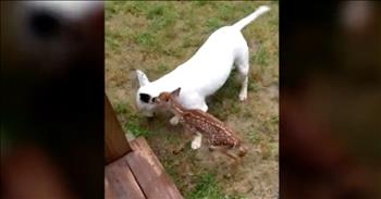 Bull Terrier And Fawn Become Adorable Friends