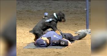 Police Dog Uses CPR To 'Save' Officer