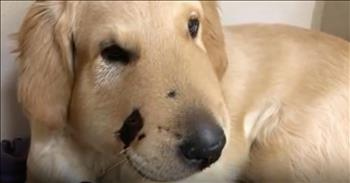 Hero Puppy Saves Owner From Rattlesnake Bite