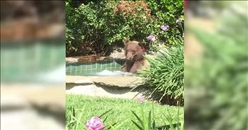 Camera Captures Bear Relaxing In A Hot Tub