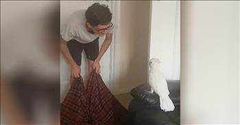Cockatoo Has Funny Reaction To Owner's Disappearing Act