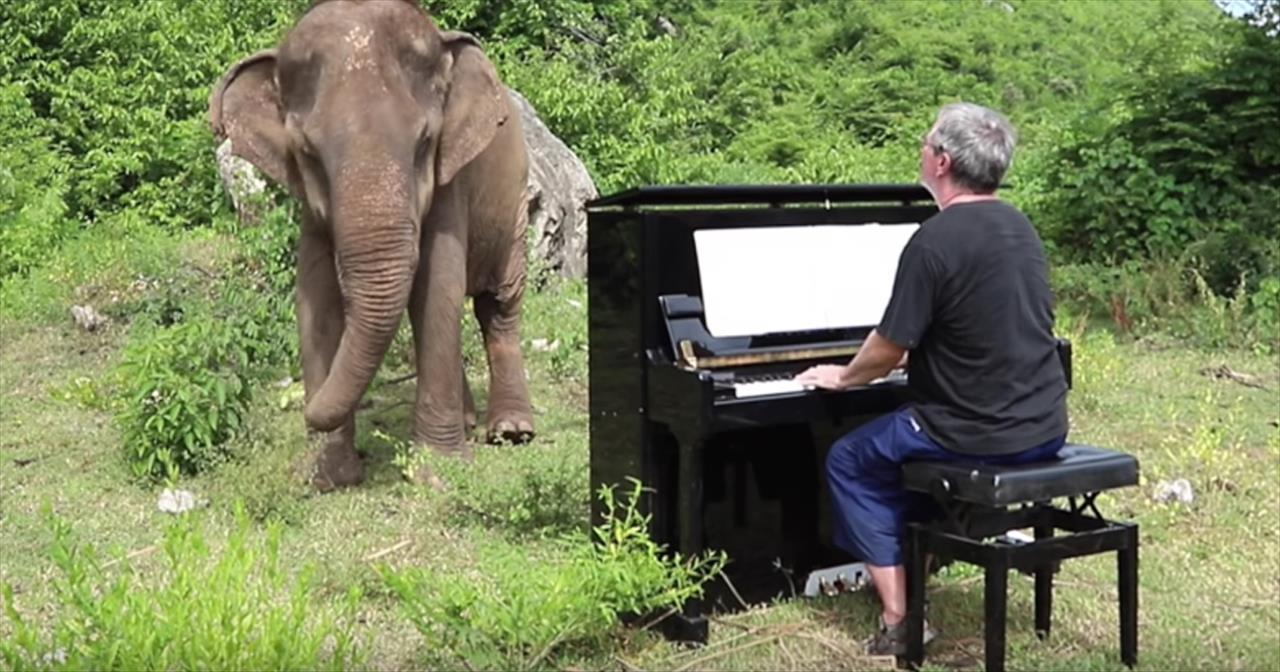 Musician+Drags+Piano+Up+Mountain+To+Play+For+Elephant