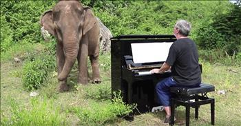 Musician Drags Piano Up Mountain To Play For Elephant