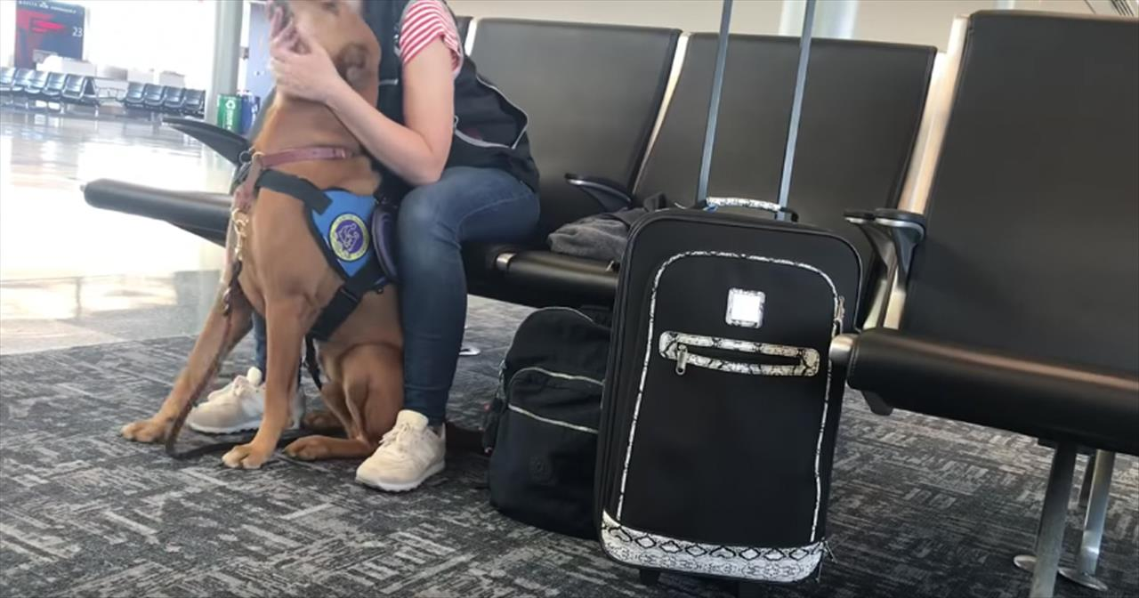 Hero+Service+Dog+Helps+Owner+During+Panic+Attack+At+Airport