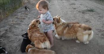 Baby Boy Plays With Corgi Puppies