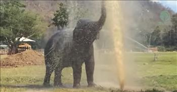 Elephant Breaks The Sprinkler And Has The Best Time