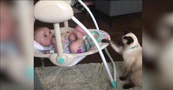 Caring Cat Helps Rock Baby In The Swing