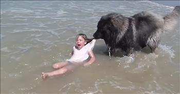 Dog Pulls Little Girl From Rough Waves