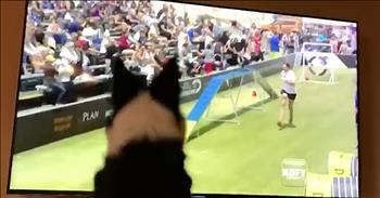 Excited Border Collie Reacts To Herself On TV