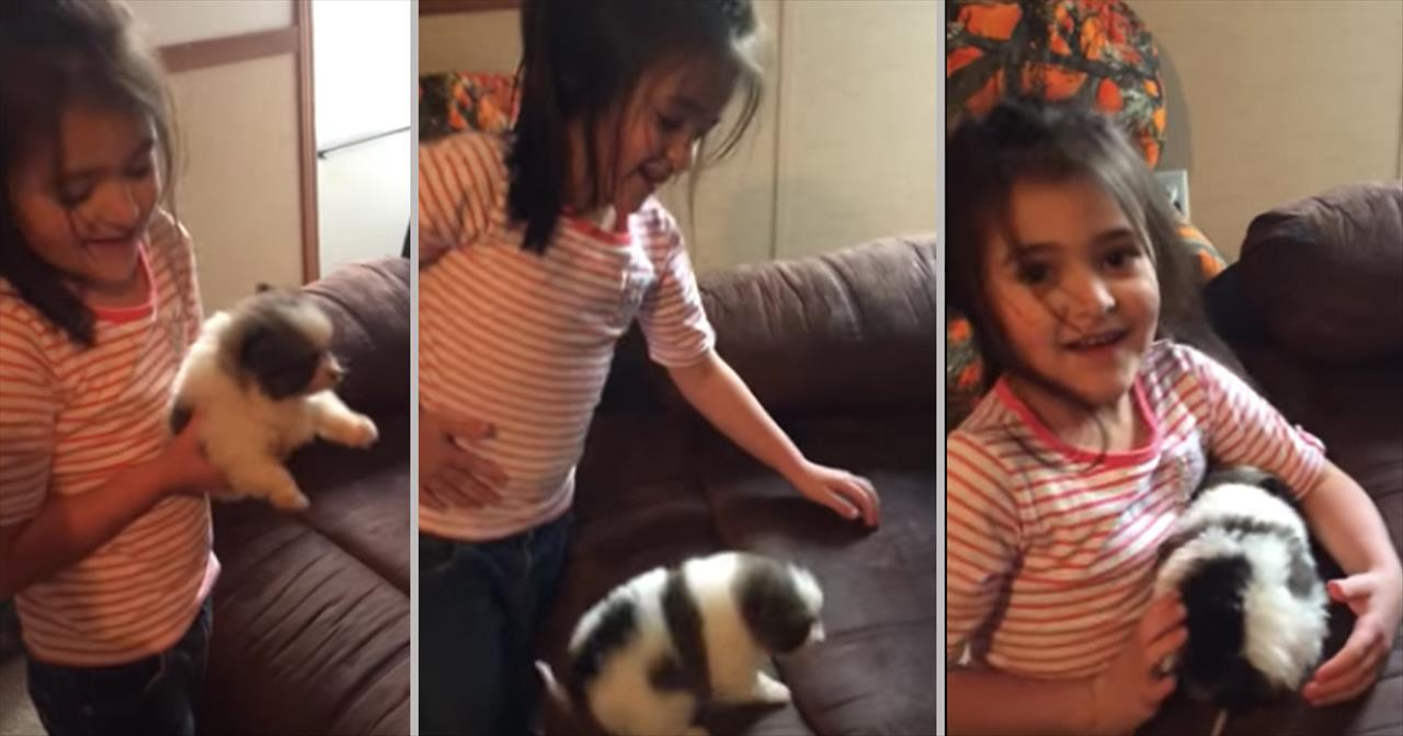 Little Girl Adorably Mistakes Her Christmas Puppy For A Hamster - Cute  Videos