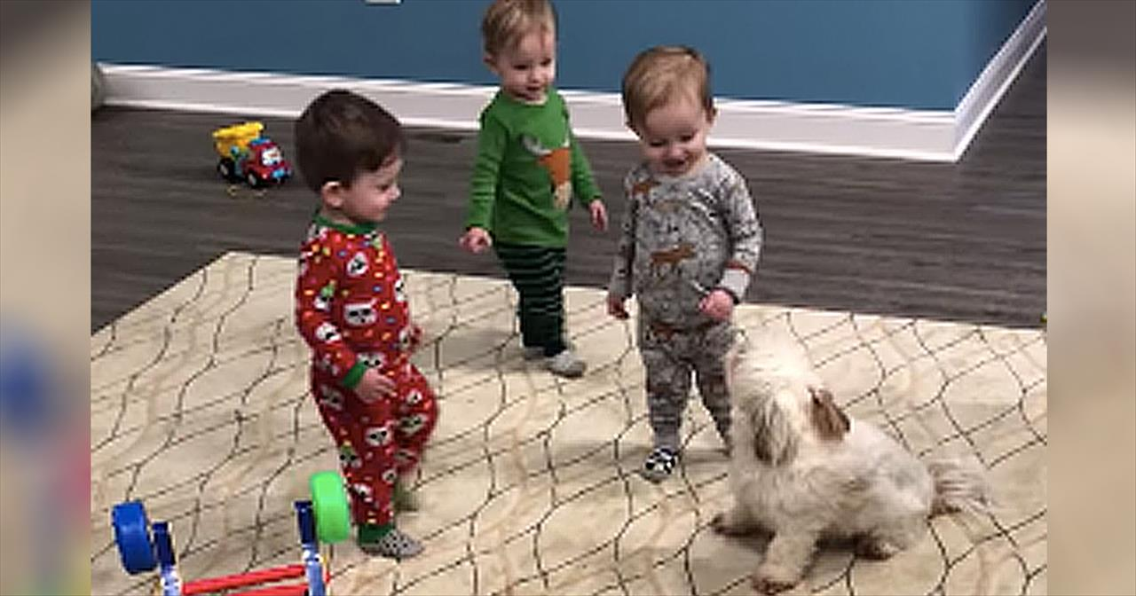 1 Year Old Triplets Adorably Play With Their Puppy Cute Videos