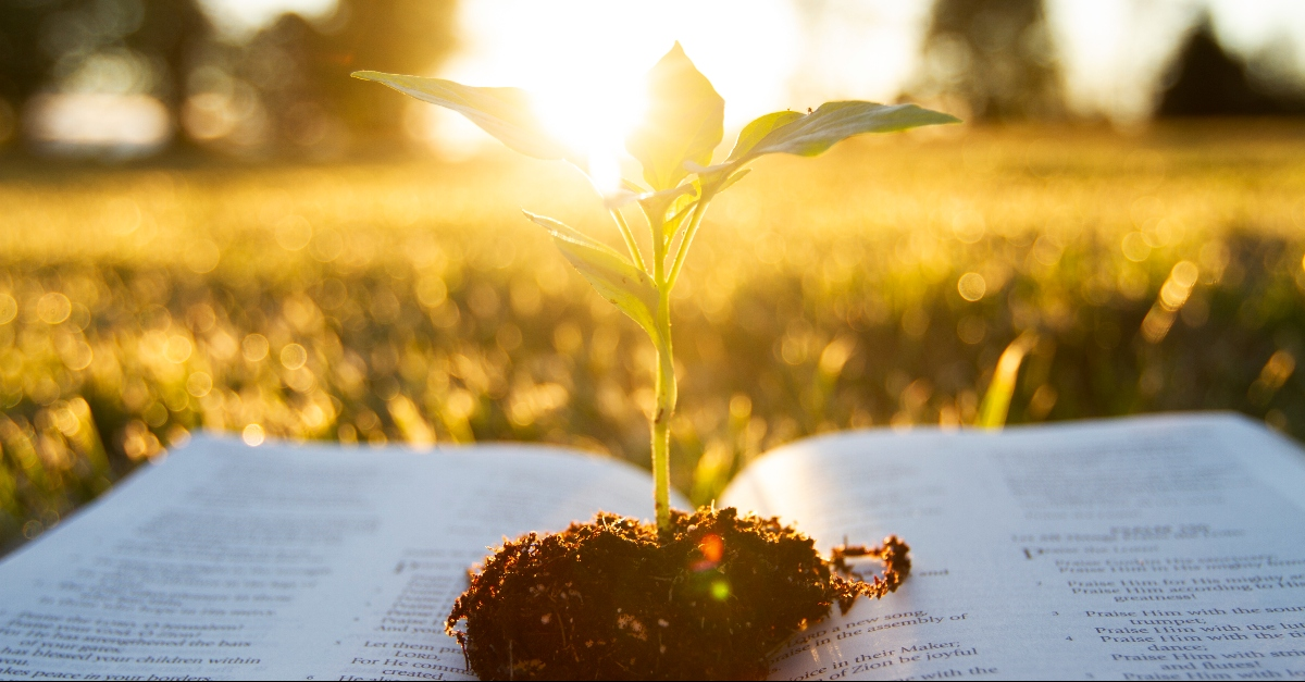 Plant growing in a Bible