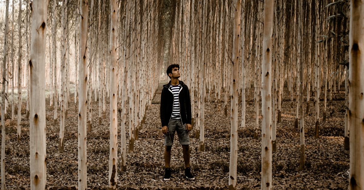 man in forest of birch trees wondering looking up