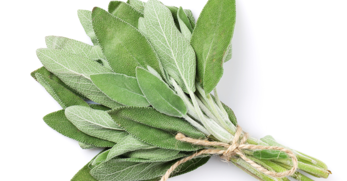 fresh garden herb sage bundle