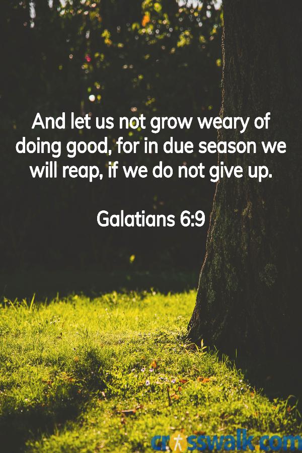 versículos de la biblia para la paciencia, Gálatas 6: 9